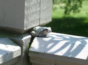 Stewart--frog
